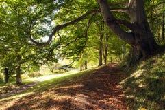 Árboles y siluetas del verano a lo largo de una trayectoria del parque Imagen de archivo libre de regalías