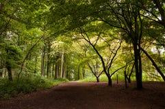 Árboles y siluetas del verano a lo largo de una trayectoria del parque Fotografía de archivo libre de regalías