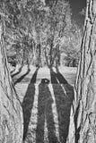 Árboles y sombra Fotos de archivo libres de regalías