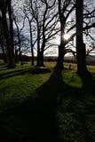 Árboles y sombras Fotografía de archivo libre de regalías