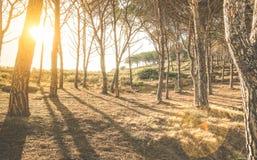 Árboles y sombras en bosque de maderas en la puesta del sol Fotos de archivo