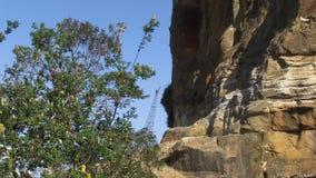 Árboles y tiro del acantilado metrajes