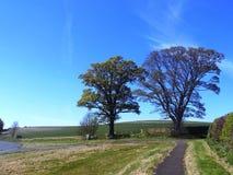 Árboles y trayectoria Nr Crookham, Northumberland del norte, Inglaterra Foto de archivo