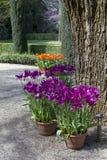 Árboles y tulipanes imagenes de archivo