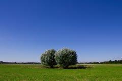 Árboles y un cielo azul Imagen de archivo