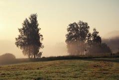 Árboles y un prado en niebla de la mañana Imagen de archivo libre de regalías