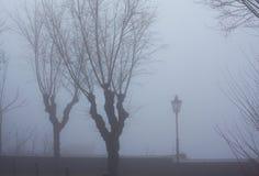 Árboles y una luz de calle solitaria imagen de archivo libre de regalías