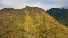 Árboles y vegetación en la ladera Isla Filipinas de Camiguin metrajes
