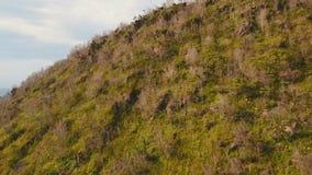 Árboles y vegetación en la ladera Isla Filipinas de Camiguin almacen de video