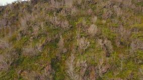 Árboles y vegetación en la ladera Isla Filipinas de Camiguin almacen de metraje de vídeo