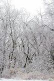 Área arborizada coberto de neve Imagem de Stock