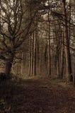 Área arborizada no harrogate Fotografia de Stock Royalty Free