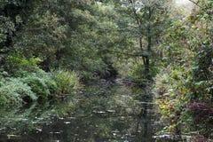 Área arborizada reflexiva cativada em torno de um córrego Foto de Stock Royalty Free