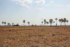Área atrás dos campos de Kiling, Phnom Penh, Camboja imagens de stock
