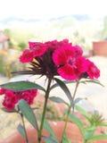 Área bonita e jardim Foto de Stock Royalty Free