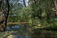 Área cenagosa en el río Tisza, Tiszaalpar, Hungría Foto de archivo libre de regalías