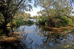Área cenagosa en el río Tisza, Tiszaalpar, Hungría Fotos de archivo libres de regalías