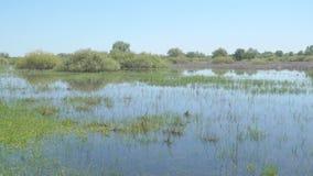 Área cenagosa inundada con agua almacen de metraje de vídeo