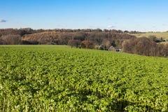Área cultivada no autmn Fotos de Stock
