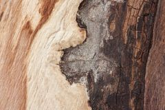 A área da árvore sem a casca que mostra máscaras coloridas da madeira, formas irregulares, o começo de deteriorar a árvore imagens de stock