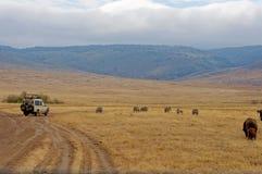 Área da conservação de Ngorongoro, TANZÂNIA Foto de Stock
