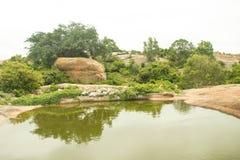 Área da floresta com fundo bonito imagens de stock royalty free