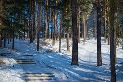 Área da floresta na cidade de Zheleznogorsk Foto de Stock Royalty Free
