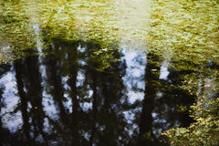 A área da floresta ou da floresta refletiu na lagoa Foto de Stock Royalty Free