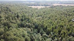 Área da floresta perto da vila de Dobromysl vídeos de arquivo
