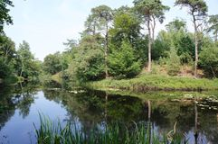 Área da natureza de Vughtse Heide nos Países Baixos imagens de stock royalty free