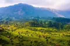 Área da plantação de chá em montanhas tropicais de Kerala, Índia Fotos de Stock Royalty Free