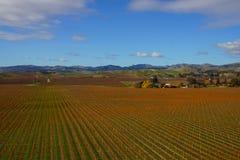 Área de crescimento do vinho no distrito de Marlborough de Nova Zelândia fotografia de stock