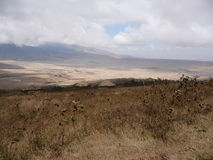 Área de la protección de Ngorongoro Fotografía de archivo libre de regalías
