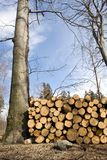 Área de la tala de árboles con la pila de registros Imágenes de archivo libres de regalías