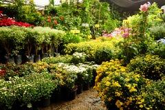 Área de loja de jardinagem da planta tropical para vender Fotografia de Stock Royalty Free