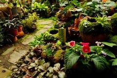 Área de loja de jardinagem da planta tropical para vender Imagem de Stock Royalty Free