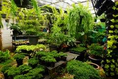 Área de loja de jardinagem da planta tropical para vender Imagens de Stock Royalty Free