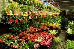 Área de loja de jardinagem da planta tropical para vender Foto de Stock Royalty Free