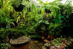 Área de loja de jardinagem da planta tropical para vender Fotos de Stock