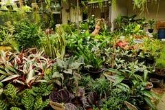 Área de loja de jardinagem da planta tropical para vender Fotos de Stock Royalty Free