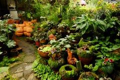 Área de loja de jardinagem da planta tropical para vender Imagens de Stock