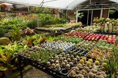 Área de loja de jardinagem da planta tropical para vender Foto de Stock