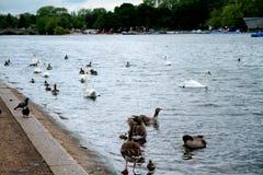 Área de los jardines y de Hyde Park de Kensington Fotos de archivo