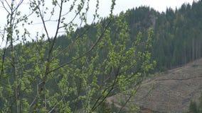 Área de montaña despoblada de árboles almacen de video