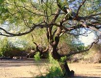 Área de picnic sombría Imagen de archivo libre de regalías
