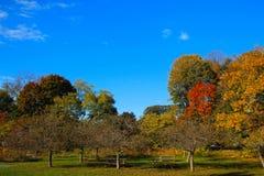 Área de piquenique com folhagem de outono imagens de stock