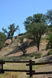 A área de piquenique do parque nacional dos pináculos com musgo cobriu árvores e cerca Fotografia de Stock