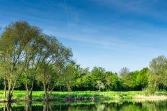 Área de protección de naturaleza con los árboles un pequeño lago en la sol Imagenes de archivo
