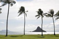 Área de reconstrucción tropical de la línea de costa Fotografía de archivo libre de regalías