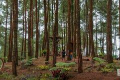 Área de recreação do ‹do †do ‹do †a floresta de Kalilo do pinus, Kaligesing Purworejo Indonésia fotografia de stock